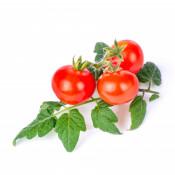 Cherry tomato Lingot