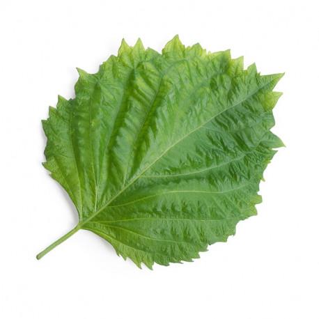 Lingot® Shiso vert BIO
