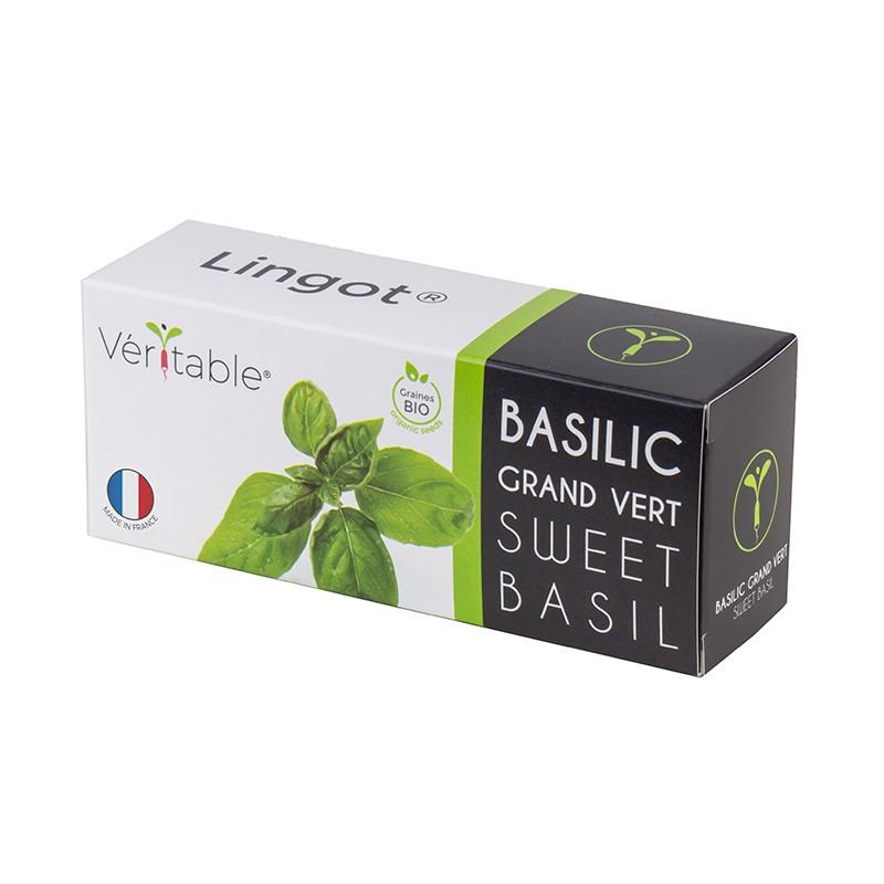Sweet Basil Lingot