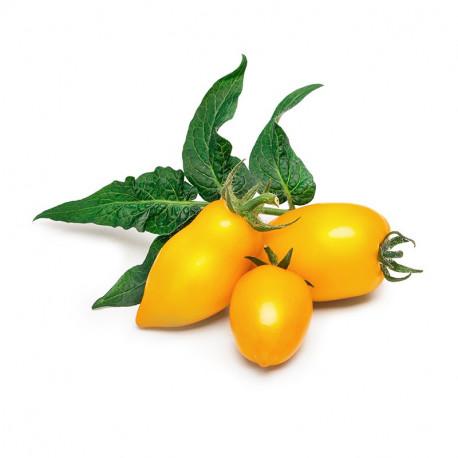 Lingot® Yellow Mini-Tomato